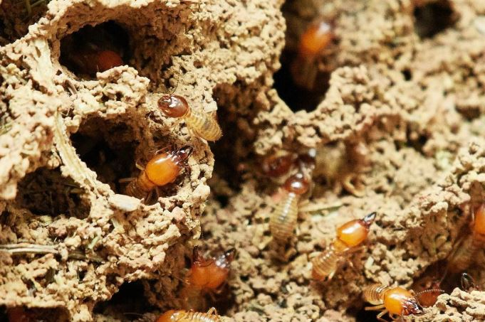 termite inspection frederick md